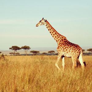 Africa Luxury Concierge | Lifestyle Management