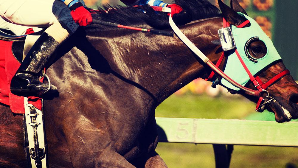 Sports   Equestrian, Les 5 Etoiles De Pau, October, Pau, France